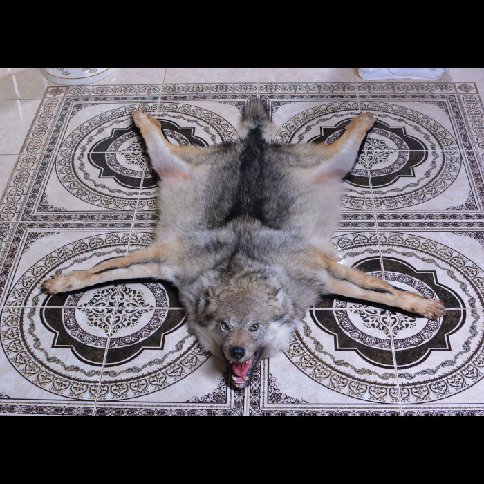 Wolf Rug Taxidermy Mount For Sale