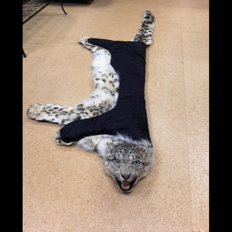 Snow leopard Rug Taxidermy Mount For Sale
