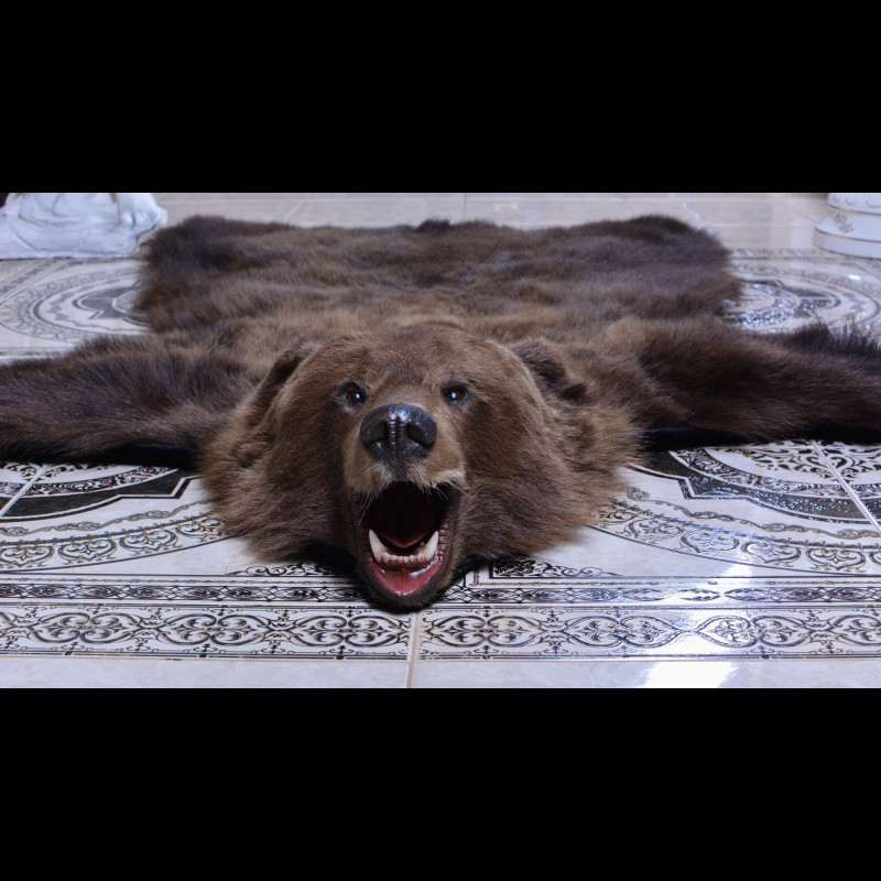 Bear Rug Taxidermy Mount For Sale