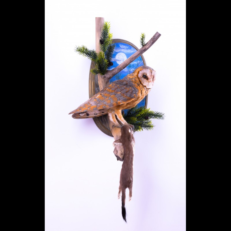 Barn owl with least weasel Taxidermy Mount For Sale