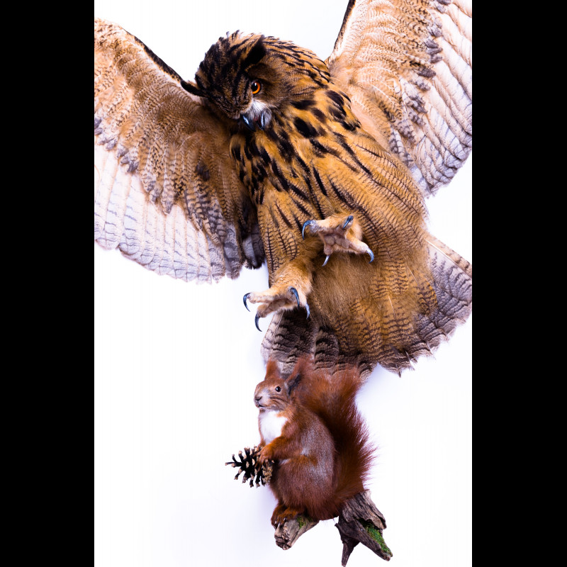 Eagle-Owl with squirrel Taxidermy Mount For Sale