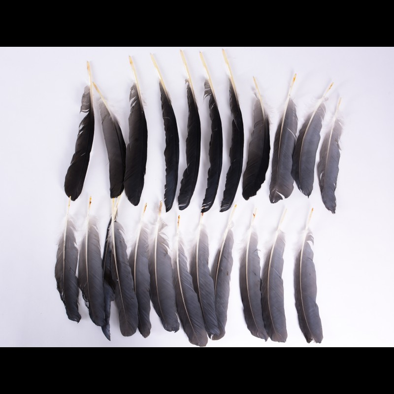 Feather Gray Heron Taxidermy For Sale