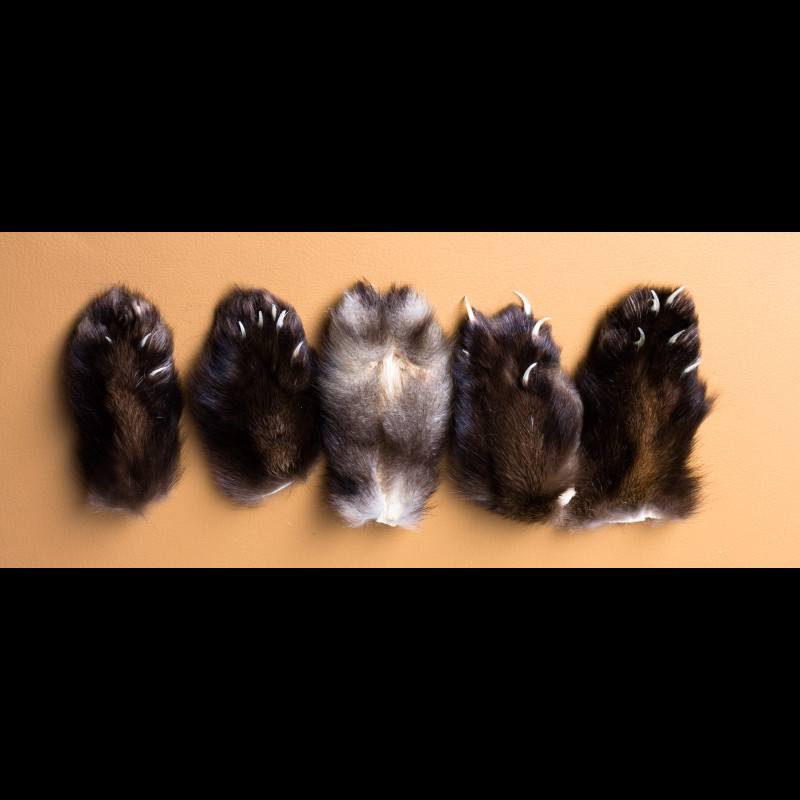 Sable Claws and Paws Taxidermy For Sale