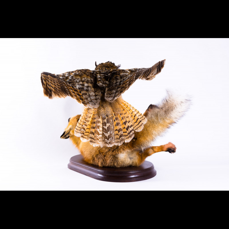 Eagle-Owl with Fox Taxidermy Mount For Sale