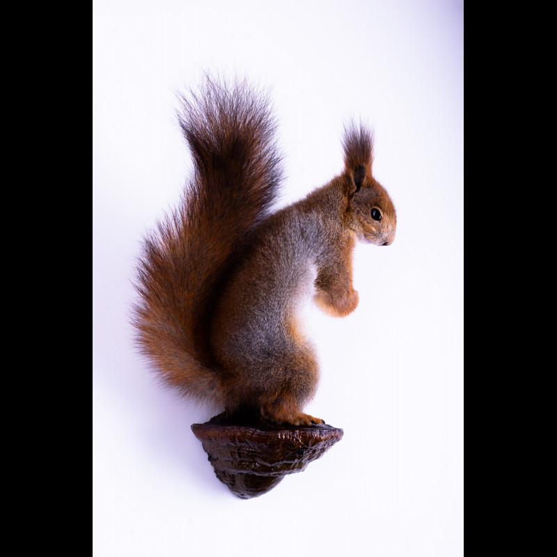 Great grey Owl with Fieldfare Taxidermy Mount For Sale