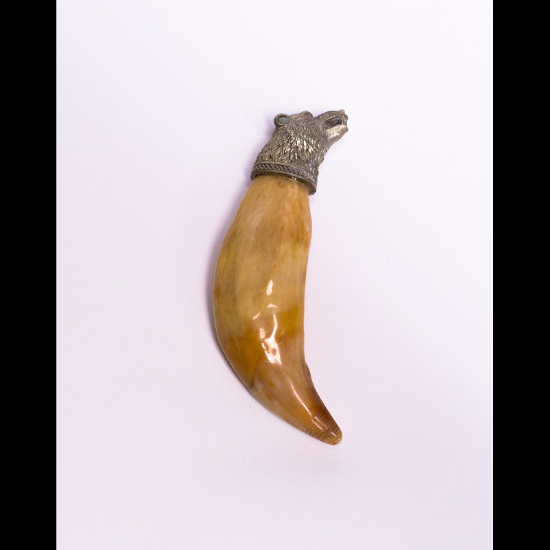 Tusk Far Eastern bear Claws and Paws Taxidermy  For Sale